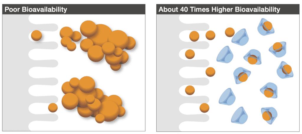 ciberžolės ekstrakto molekulės yra hidrofobinės, todėl kaupiasi žmogaus organizme. Dėl to virškinimo trakte absorbuojamos tik kelios molekulės